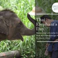 special-offerenjoy-elephant-tour-with-20off-plus-best-price-guaran